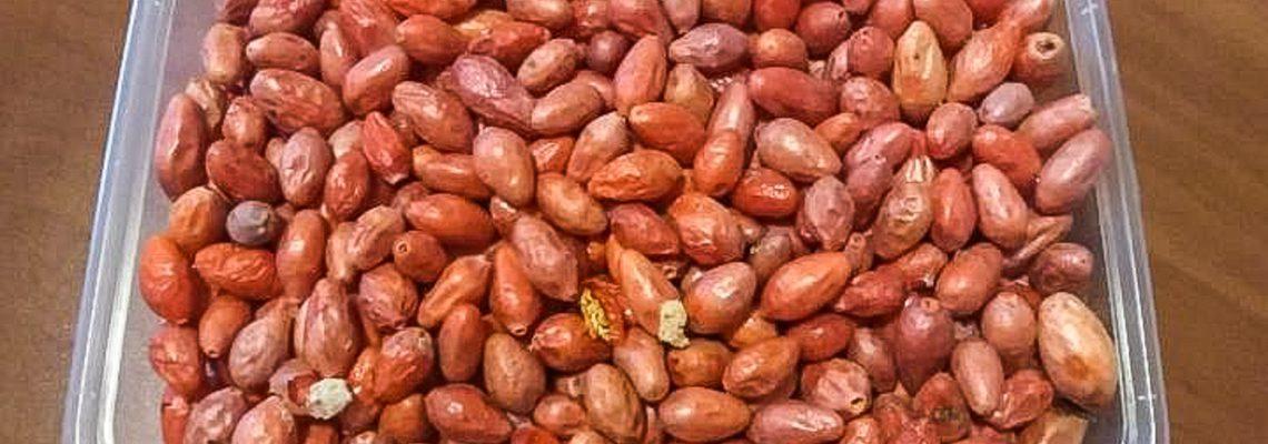 Obrazek tytułowy - Owoce liofilizowane